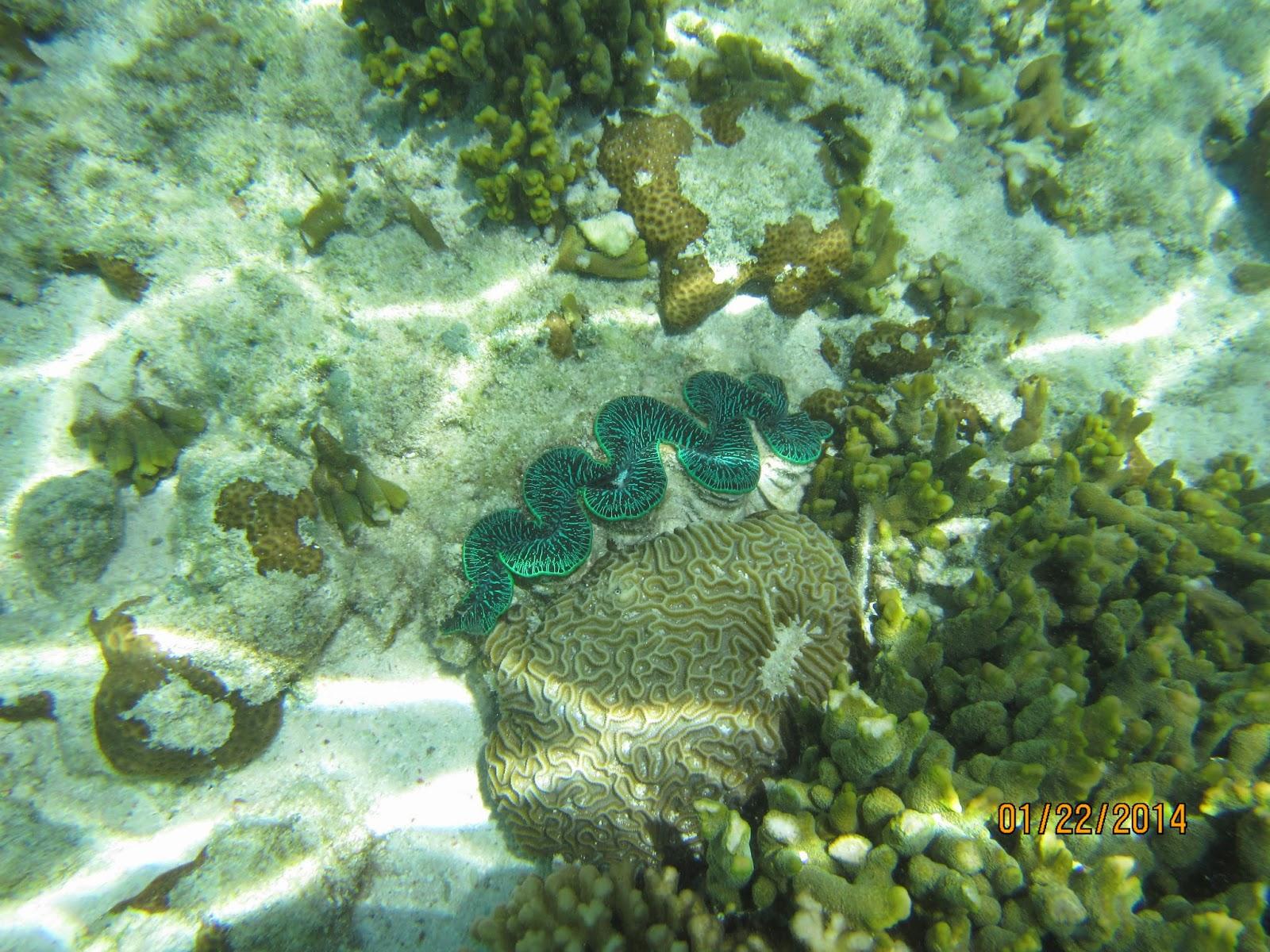 【澳洲】大堡礁的海龜奇遇記 – 黃金海岸9天6夜親子遊自由行之九